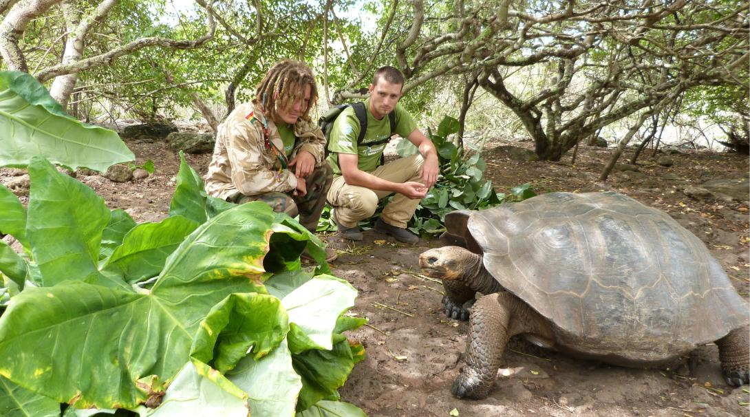Tortoises get fed as part of conservation efforts in Ecuador